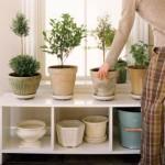 Feng shui otthonunkban: a szerencsehozó növények