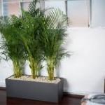 Hasznos növények az irodába